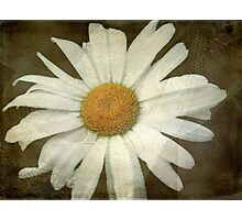 Springing Up Daisies © Photographic Print