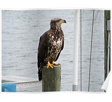 FISHING BIRD Poster