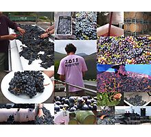 Red Wine in the making Photographic Print