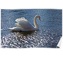 The Mute Swan..... Poster