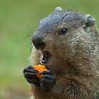 Yum Yum, Carrots GOOD! by ©  Paul W. Faust