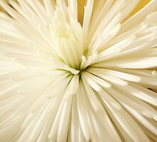 Spikey Flower Pedals II by Patsy Castle