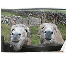 Smiling Donkeys! Poster