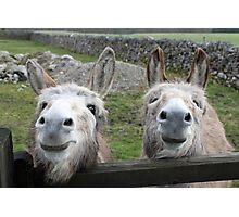 Smiling Donkeys! Photographic Print
