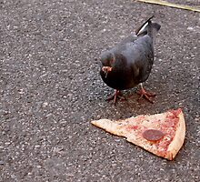 Pepperoni Pigeon  by Patsy Castle