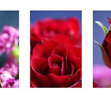 Rose Montage by Matt Stringer