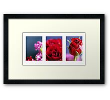 Rose Montage Framed Print