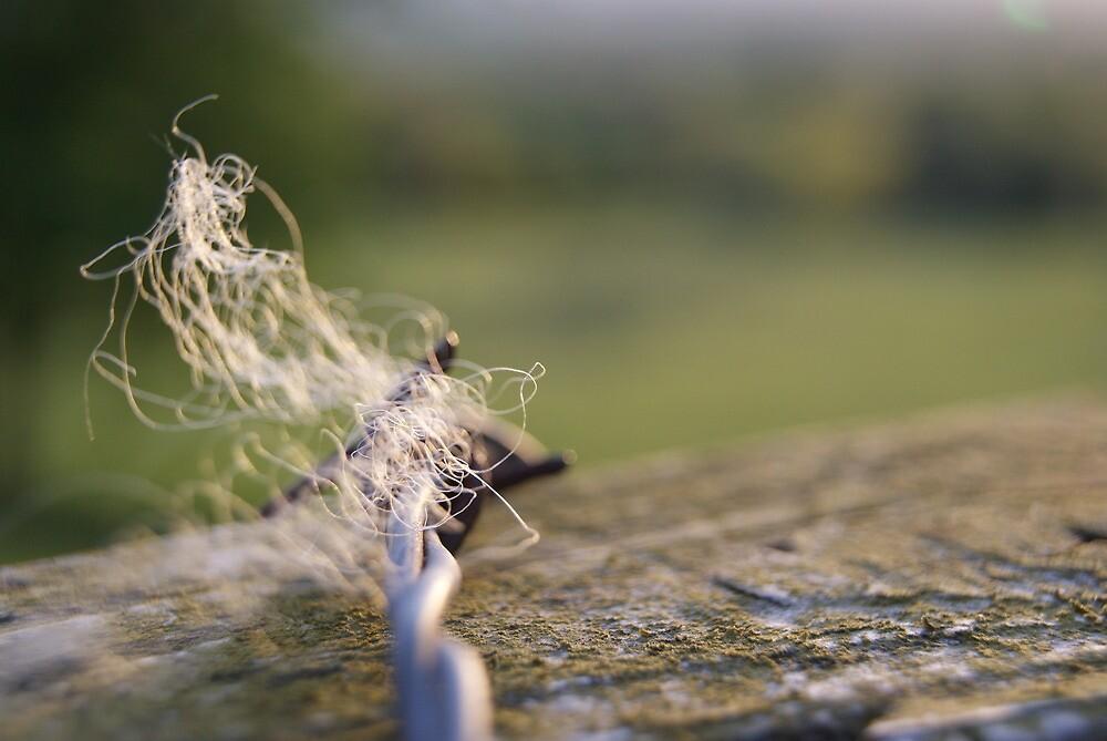 Barbed Wire by Matt Stringer