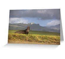 Hearst Castle Elephant Seal Greeting Card
