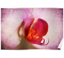 Pink textured orchid Poster