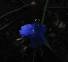 'NOW I SEE THE LIGHT!' blue flower, by Rita Blom