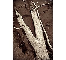 """Forked Shore"" Photographic Print"