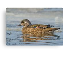 Female Wood Duck Canvas Print