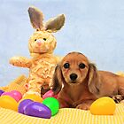 Easter Pup by Ree  Reid