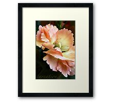 Carnations and Falling In Love Framed Print
