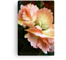 Carnations and Falling In Love Canvas Print