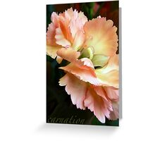 Carnations and Falling In Love Greeting Card