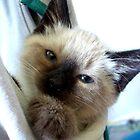 """Cat Tip #5 - """"I Sleep Where I Want...When I Want!!"""" by Vanessa Serroul"""