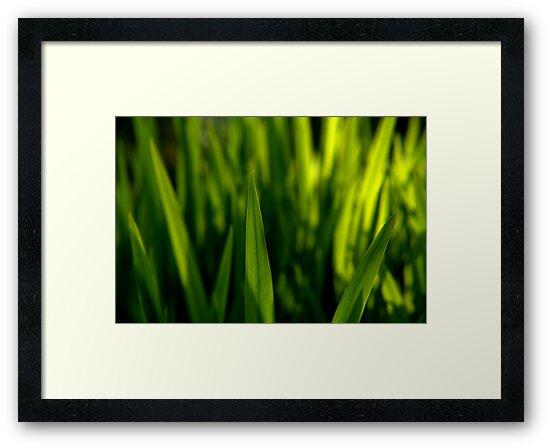 Grass is Greener? by brucejohnson