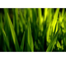 Grass is Greener? Photographic Print