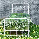 Flower Bed by Caren