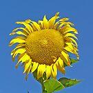 I Wanna Get High ~ On Sunshine by Patty (Boyte) Van Hoff