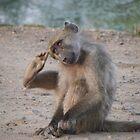 Scratching Monkey by Steven Conrad