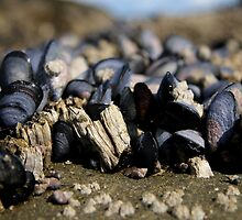 barnacles mussels and snails  by TerrillWelch
