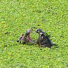 Hippos Talking by Steven Conrad