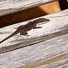 Garden lizard on the glider by Ann Reece