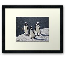 3 Penguin Framed Print