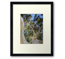 Mother Nature's Treehouse Framed Print