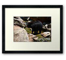 North American Black Bear 2 Framed Print