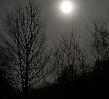 Moon Dust by Jeanne Sheridan