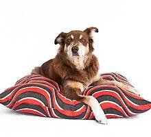 Retro Cushion by -gila-