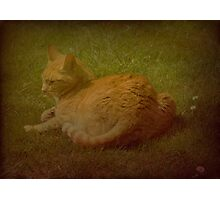Louie the Cathedral Cat Photographic Print