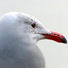 Seagull by Gloria Abbey
