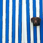 Dog peeks by Janet Leadbeater