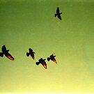 green sky birds, phnom penh, cambodia by tiro