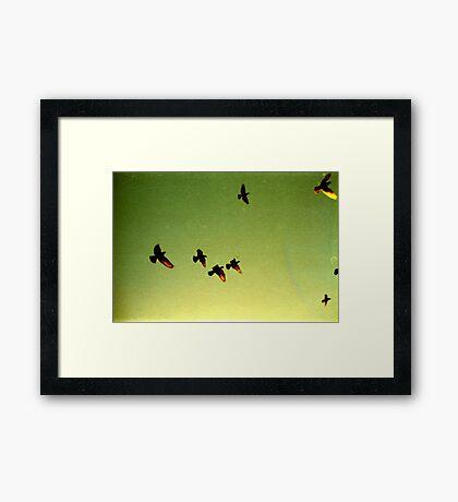 green sky birds, phnom penh, cambodia Framed Print