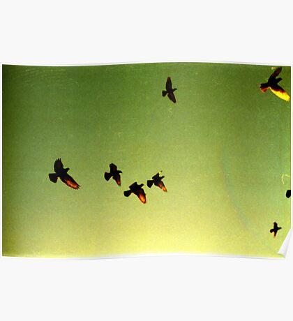 green sky birds, phnom penh, cambodia Poster