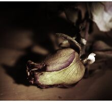 Kiss from a dying Rose by Maliha Rao