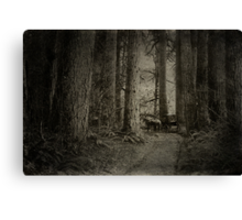 Carriage In The Woods Canvas Print