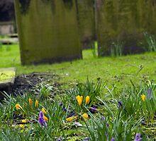 The old church garden by Philip Alexander