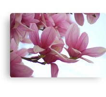 Glorious Pink! Canvas Print
