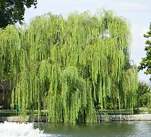 Willows and Water by Mannabelles