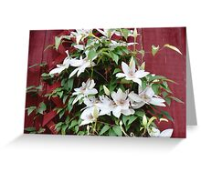 White Clematis Greeting Card