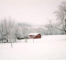 Down in the Meadow by Carol E. Davis