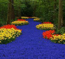 Flower path by Lindie Allen
