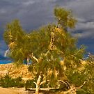 Tree in the Desert by Bryan D. Spellman
